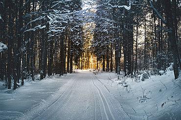 Loipe im Wald, © TVB Mondsee-Irrsee